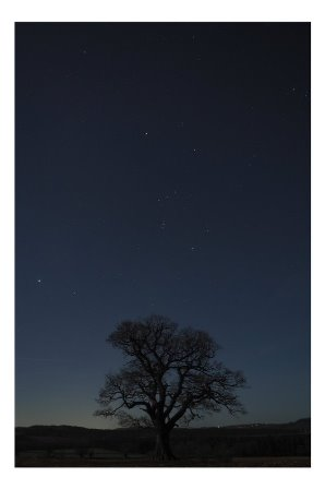 My tree and the mighty #Orion – what a beautiful night sky